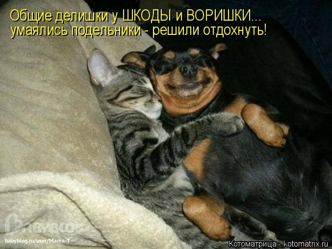 Котоматрица: Общие делишки у ШКОДЫ и ВОРИШКИ... умаялись подельники - решили отдохнуть!