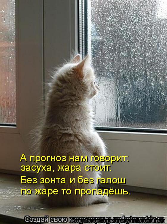 Котоматрица: засуха, жара стоит. А прогноз нам говорит: Без зонта и без галош по жаре то пропадёшь.