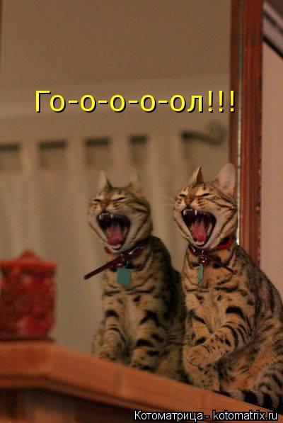 Котоматрица: Го-о-о-о-ол!!!