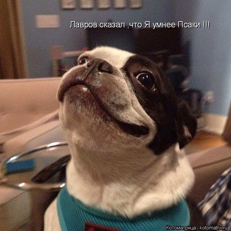 Котоматрица: Лавров сказал ,что Я умнее Псаки !!!