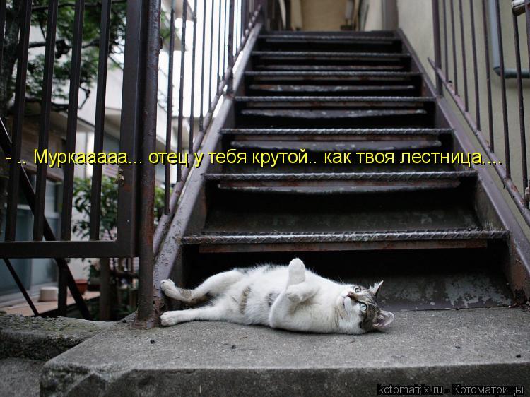 Котоматрица: - .. Муркааааа... отец у тебя крутой.. как твоя лестница....