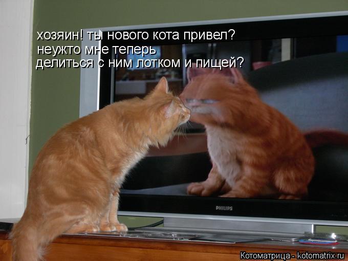 Котоматрица: хозяин! ты нового кота привел? неужто мне теперь  делиться с ним лотком и пищей?