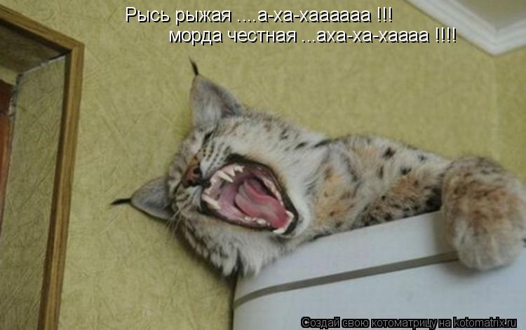 Котоматрица: Рысь рыжая ....а-ха-хаааааа !!! морда честная ...аха-ха-хаааа !!!!