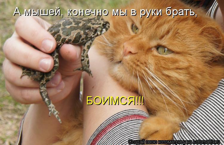Котоматрица: БОИМСЯ!!! А мышей, конечно мы в руки брать,