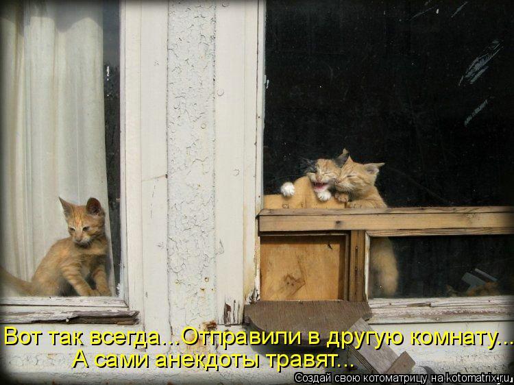 Котоматрица: А сами анекдоты травят... Вот так всегда...Отправили в другую комнату...