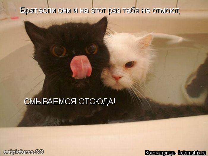 Котоматрица: Брат,если они и на этот раз тебя не отмоют, СМЫВАЕМСЯ ОТСЮДА!