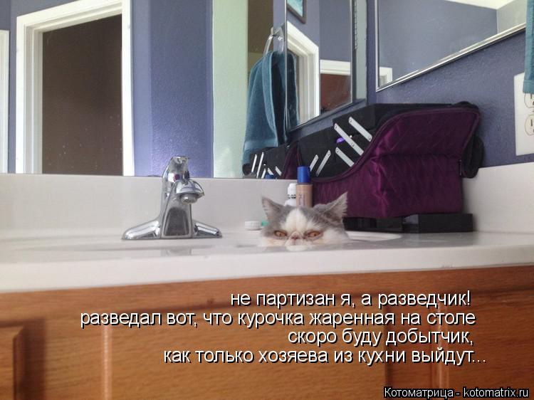 Котоматрица: не партизан я, а разведчик! разведал вот, что курочка жаренная на столе скоро буду добытчик, как только хозяева из кухни выйдут...