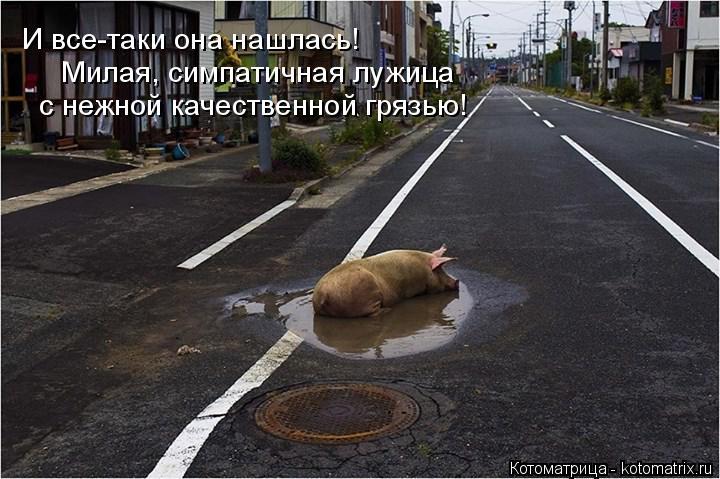 Котоматрица: И все-таки она нашлась! Милая, симпатичная лужица  с нежной качественной грязью!