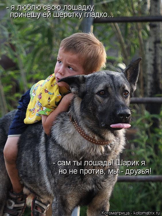 Котоматрица: - я люблю свою лошадку, причешу ей шерстку гладко... - сам ты лошадь! Шарик я. но не против, мы - друзья!