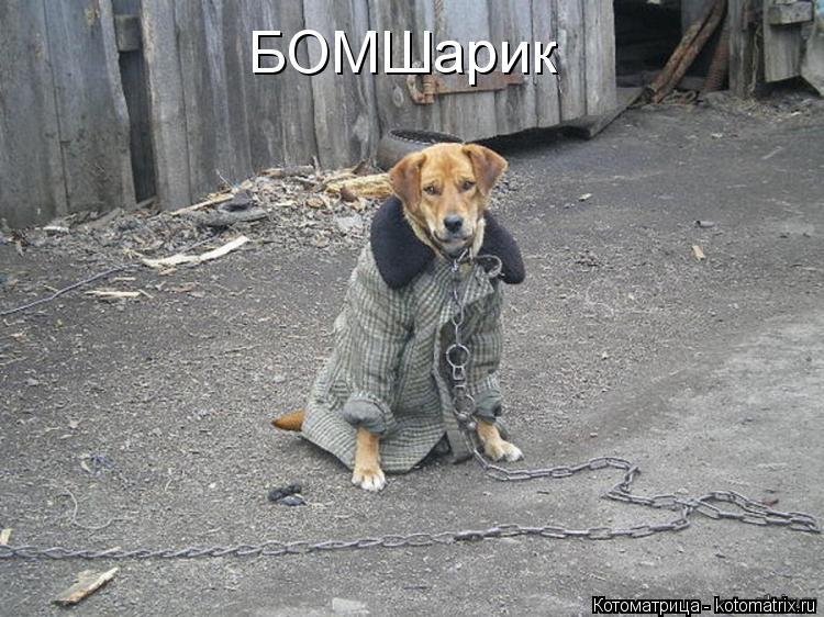 Котоматрица: БОМШарик