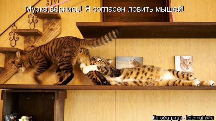 Котоматрица: Мурка,вернись! Я согласен ловить мышей!
