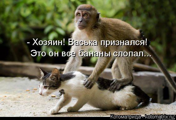 Котоматрица: - Хозяин! Васька признался! Это он все бананы слопал...