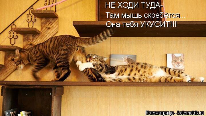 Котоматрица: НЕ ХОДИ ТУДА- Там мышь скребётся... Она тебя УКУСИТ!!!