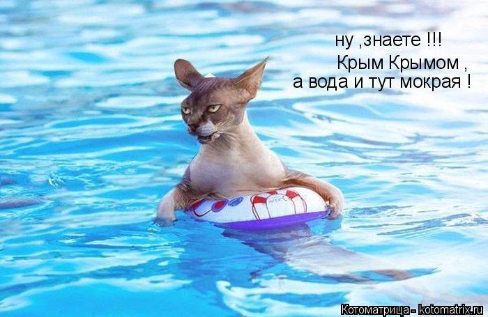 Котоматрица: ну ,знаете !!! Крым Крымом , а вода и тут мокрая !