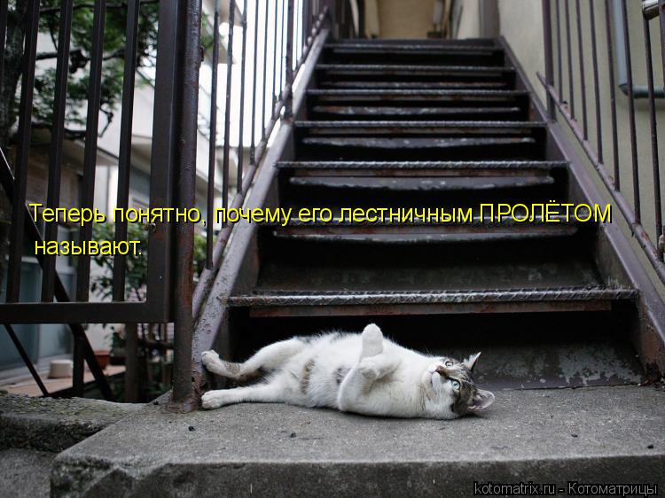 Котоматрица: Теперь понятно, почему его лестничным ПРОЛЁТОМ называют.