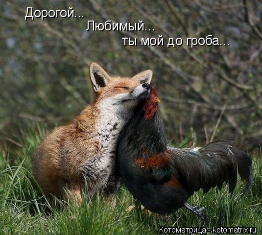 Котоматрица: Дорогой... Любимый... ты мой до гроба...