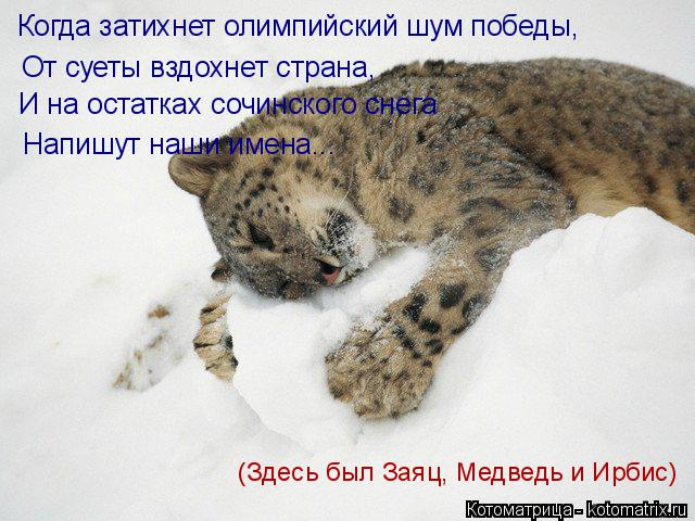 Котоматрица: Когда затихнет олимпийский шум победы,  От суеты вздохнет страна, И на остатках сочинского снега Напишут наши имена... (Здесь был Заяц, Медве