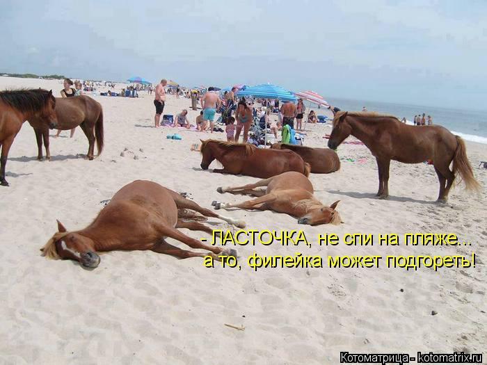 Котоматрица: - ЛАСТОЧКА, не спи на пляже... а то, филейка может подгореть!