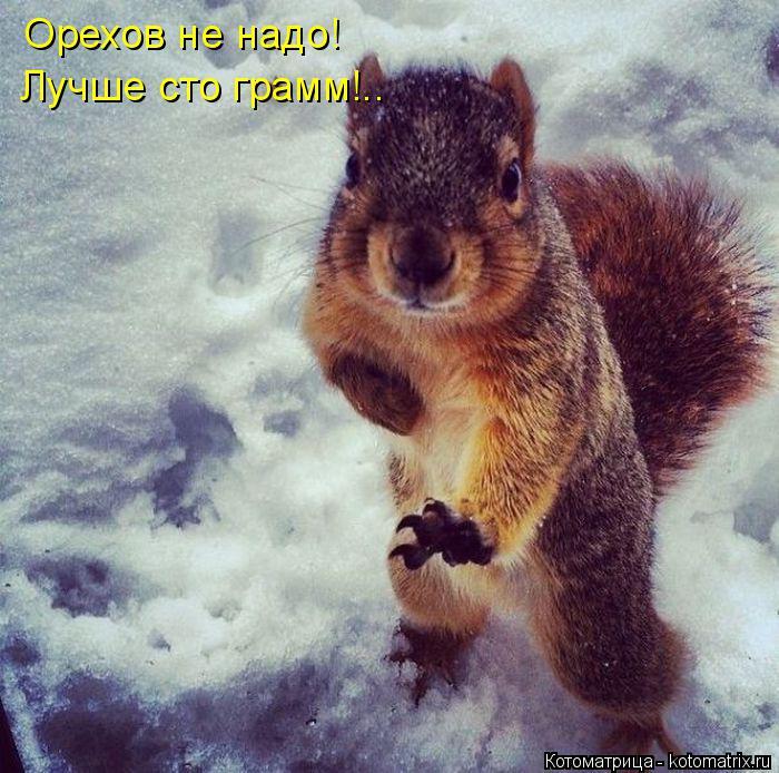 Котоматрица: Орехов не надо! Лучше сто грамм!..