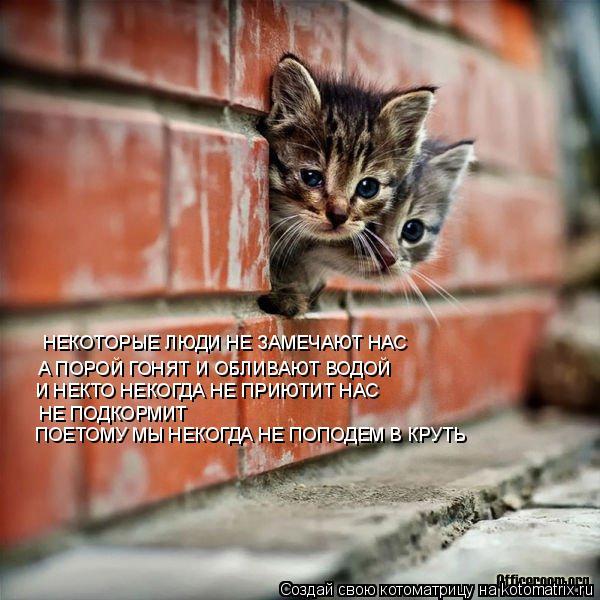 Котоматрица: А ПОРОЙ ГОНЯТ И ОБЛИВАЮТ ВОДОЙ И НЕКТО НЕКОГДА НЕ ПРИЮТИТ НАС НЕКОТОРЫЕ ЛЮДИ НЕ ЗАМЕЧАЮТ НАС     НЕ ПОДКОРМИТ    ПОЕТОМУ МЫ НЕКОГДА НЕ ПОПОДЕМ