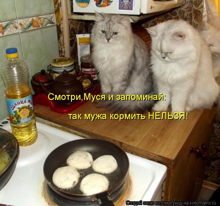 Котоматрица: Смотри,Муся и запоминай: так мужа кормить НЕЛЬЗЯ!