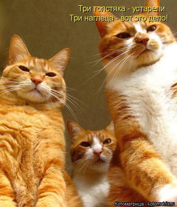 Котоматрица: Три толстяка - устарели  Три наглеца - вот это дело!