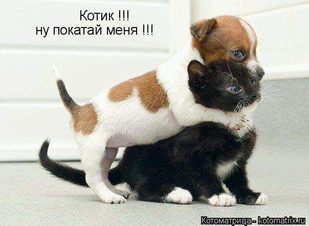 Котоматрица: Котик !!! ну покатай меня !!!