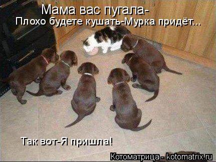 Котоматрица: Мама вас пугала- Плохо будете кушать-Мурка придёт... Так вот-Я пришла!