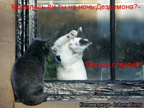 Котоматрица: Молилась ли ты на ночь,Дездемона?-  Васька,отвали!!!