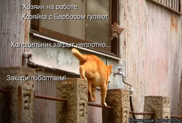 Котоматрица: Хозяин на работе, Хозяйка с Барбосом гуляют, Холодильник закрыт неплотно... Заходи,поболтаем!
