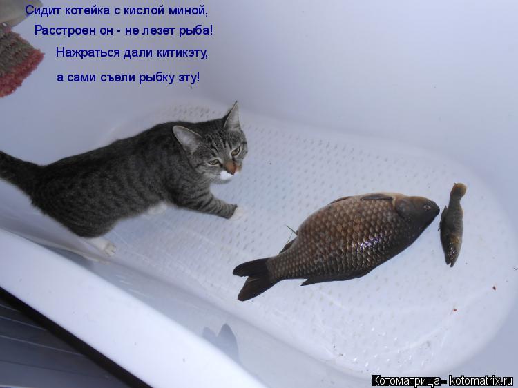 Котоматрица: Сидит котейка с кислой миной, Расстроен он - не лезет рыба! Нажраться дали китикэту, а сами съели рыбку эту!