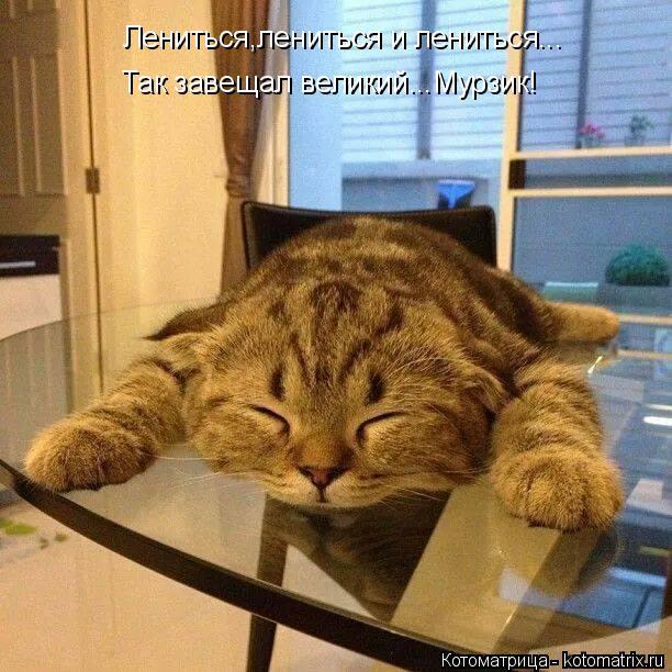Котоматрица: Лениться,лениться и лениться... Так завещал великий...Мурзик!