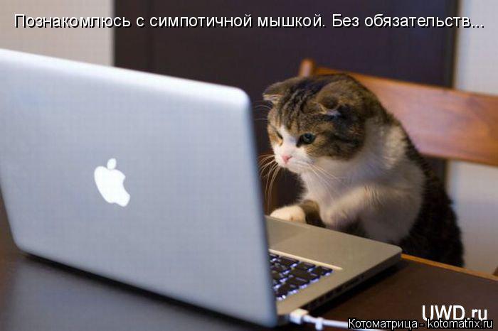 Котоматрица: Познакомлюсь с симпотичной мышкой. Без обязательств...