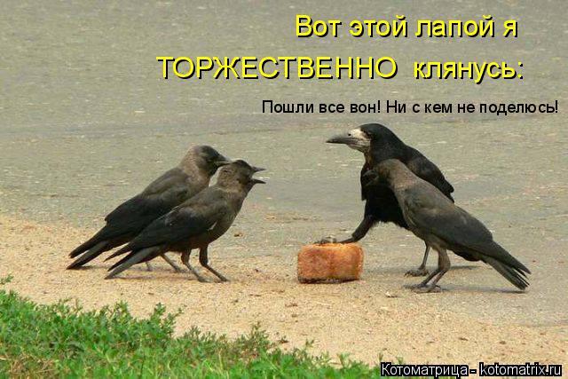http://kotomatrix.ru/images/lolz/2014/06/25/kotomatritsa_0I.jpg