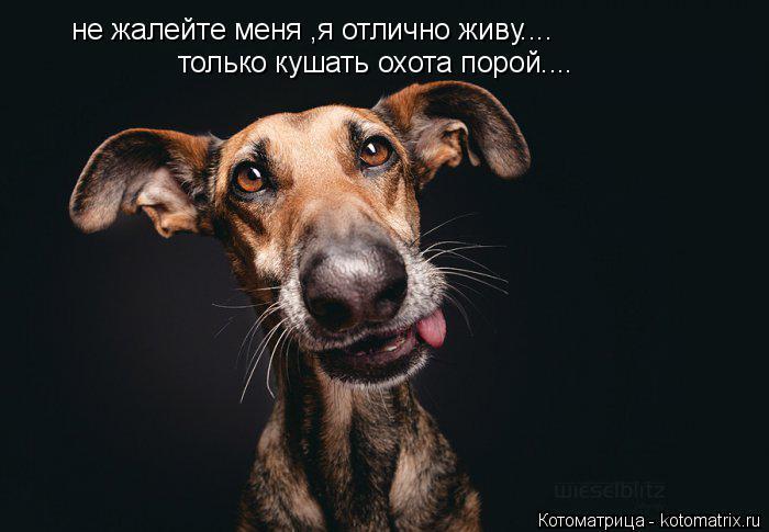 Котоматрица: не жалейте меня ,я отлично живу.... только кушать охота порой....