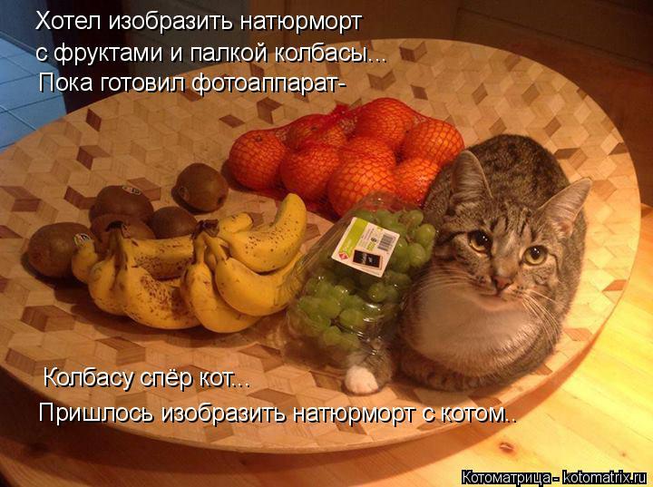 Котоматрица: Хотел изобразить натюрморт  с фруктами и палкой колбасы... Пока готовил фотоаппарат- Колбасу спёр кот... Пришлось изобразить натюрморт с кот