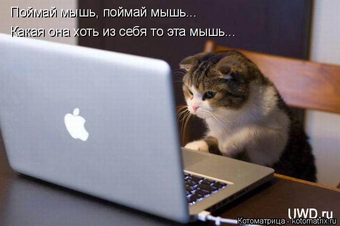 Котоматрица: Поймай мышь, поймай мышь... Какая она хоть из себя то эта мышь...