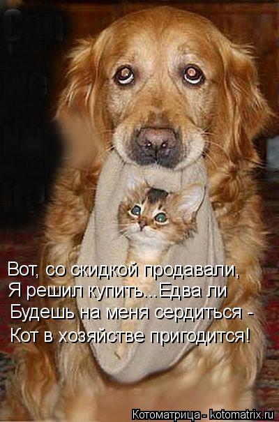 Котоматрица: Вот, со скидкой продавали, Я решил купить...Едва ли Будешь на меня сердиться - Кот в хозяйстве пригодится!