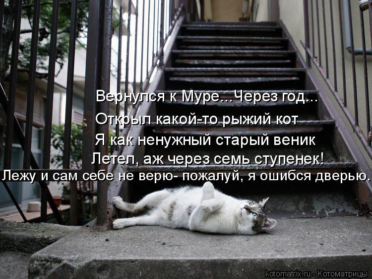 Котоматрица: Вернулся к Муре...Через год... Открыл какой-то рыжий кот Я как ненужный старый веник Летел, аж через семь ступенек! Лежу и сам себе не верю- пож