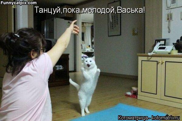 Котоматрица: Танцуй,пока молодой,Васька!