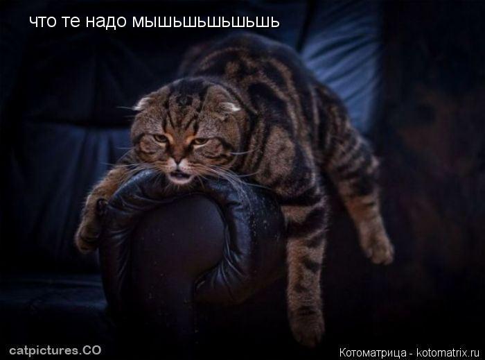 Котоматрица: что те надо мышьшьшьшьшь