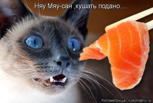Котоматрица: Няу Мяу-сан ,кушать подано....