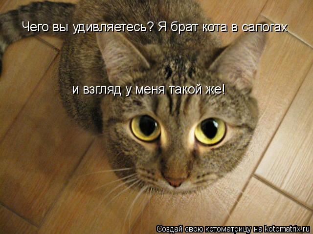 Котоматрица: Чего вы удивляетесь? Я брат кота в сапогах и взгляд у меня такой же!