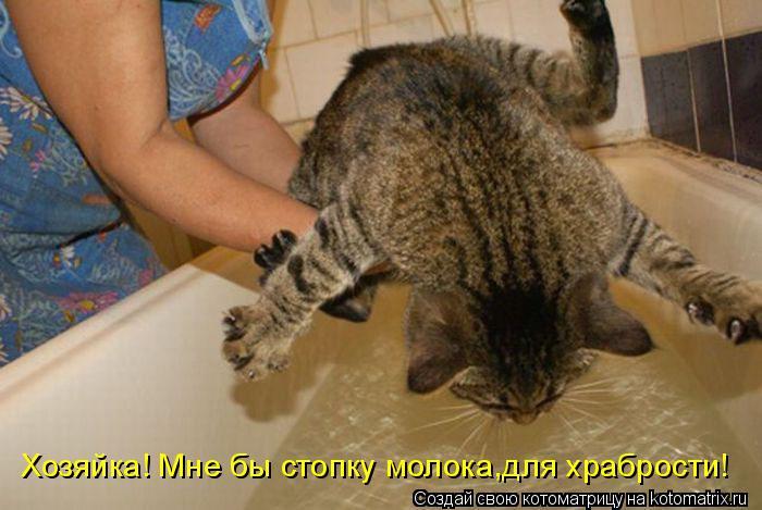 Котоматрица: Хозяйка! Мне бы стопку молока,для храбрости!