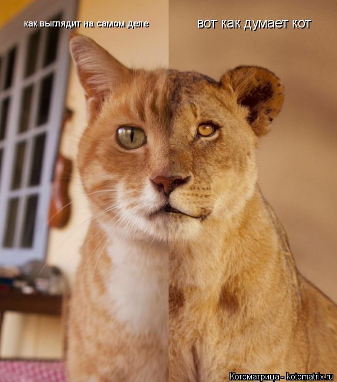 Котоматрица: вот как думает кот как выглядит на самом деле