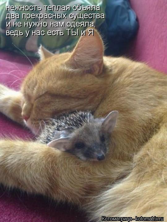 Котоматрица: нежность теплая объяла два прекрасных существа и не нужно нам одеяла, ведь у нас есть ТЫ и Я