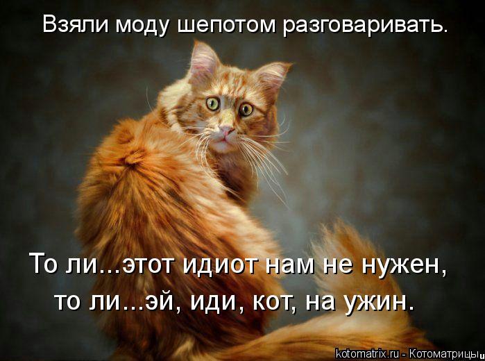 Котоматрица: Взяли моду шепотом разговаривать. То ли...этот идиот нам не нужен, то ли...эй, иди, кот, на ужин.