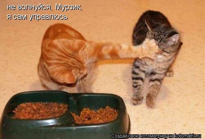 Котоматрица: не волнуйся, Мурзик, я сам управлюсь