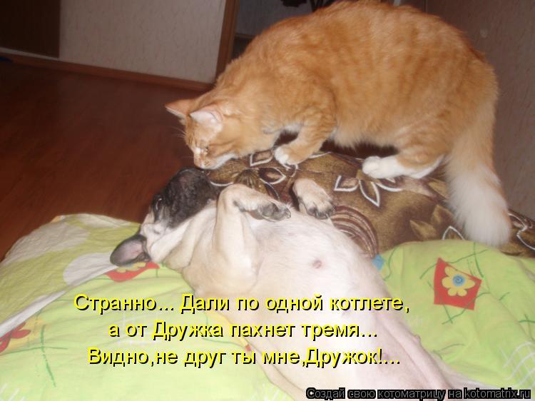 Котоматрица: Странно... Дали по одной котлете, а от Дружка пахнет тремя... Видно,не друг ты мне,Дружок!...