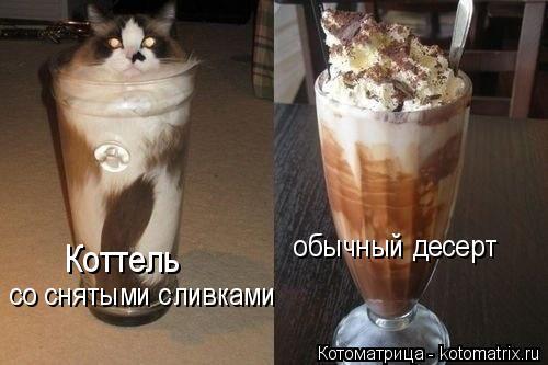 Котоматрица: Коттель  со снятыми сливками обычный десерт